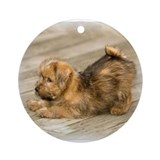 Playful Norfolk Terrier Pup Keepsake (Round)