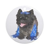 Nice Jewish Cairn Terrier