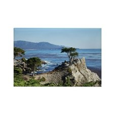 Lone Cypress Rectangle Magnet