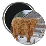 "Highland Cattle 2.25"" Magnet (100 pack)"