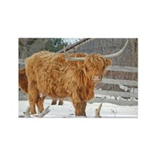 Highland Cattle Rectangle Magnet