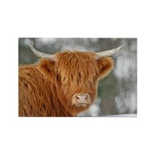 Highland Heifer Rectangle Magnet