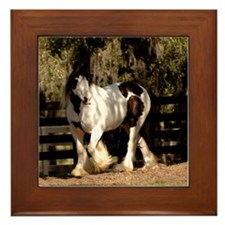 Cute Gypsy vanner horse Framed Tile
