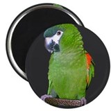 Hahns Mini Macaw Refridgerator Magnet