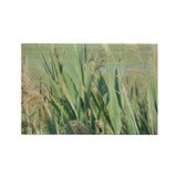 Sea Oats Rectangle Magnet