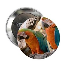 "Harlequin Macaws 2.25"" Button"