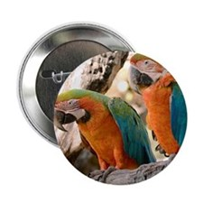 "Harlequin Macaws 2.25"" Button (10 pack)"
