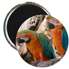 Harlequin Macaws Magnet