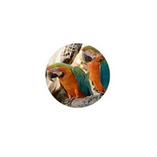 Harlequin Macaws Mini Button