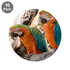 "Harlequin Macaws 3.5"" Button (10 pack)"