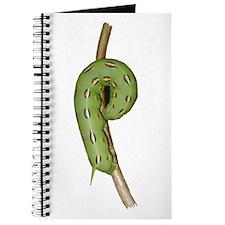 Helaine's Hornworm Journal
