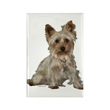 Silky Terrier Rectangle Magnet