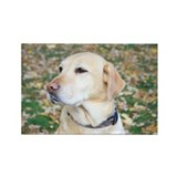 Yellow Lab #2 Portrait Rectangle Magnet