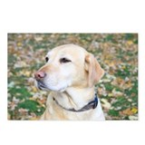 Yellow Lab #2 Portrait Postcards (Package of 8)