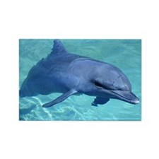 Serenity Dolphin Rectangle Magnet (10 pack)