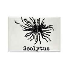 Scolytus Rectangle Magnet