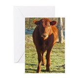 red angus 2 Greeting Card