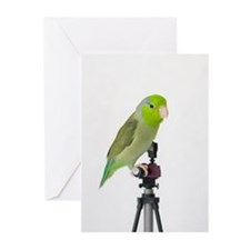 Parrotlet Greeting Cards (Pk of 10)