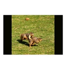 Squirrel Leapfrog Postcards (Package of 8)
