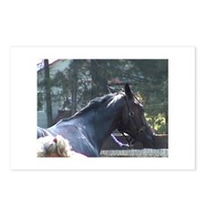 Postcards Two Year Old Thoroughbred Filly by