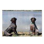 German Wirehaired Pointer Postcards (Package of 8)