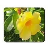 Yellow Mandevilla Mousepad