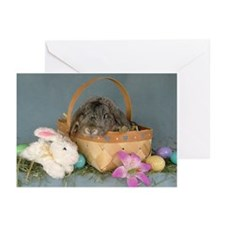 Easter Bunny Rabbit Cards 5x7 (Pk of 20)