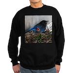 Baby Steller's Jays Sweatshirt (dark)