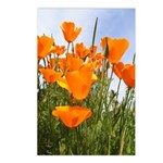 Orange California Poppies Postcards (Package of 8)