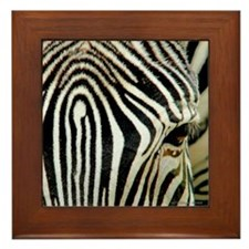 Zebra Eye Framed Tile
