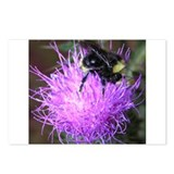 Bumblebee on Thistle Postcards (Package of 8)