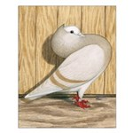 Khaki Mookee Pigeon Small Poster