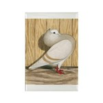 Khaki Mookee Pigeon Rectangle Magnet (100 pack)
