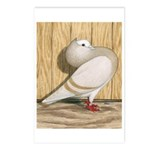 Khaki Mookee Pigeon Postcards (Package of 8)