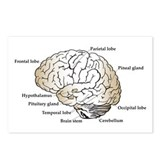 Brain Section Postcards (Package of 8)