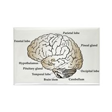 Brain Section Rectangle Magnet