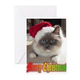 Ragdoll cat Greeting Cards (10 Pack)