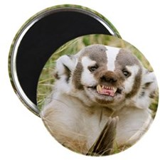 "Badger 2.25"" Magnet (100 pack)"