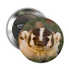 "Badger 2.25"" Button (100 pack)"