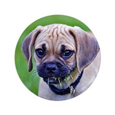 "Puggle 3.5"" Button"