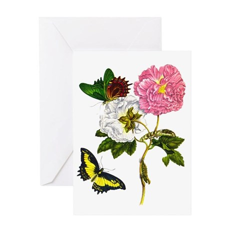 Maria Sibylla Merian II Greeting Card