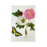 Maria Sibylla Merian II Rectangle Magnet (10 pack)