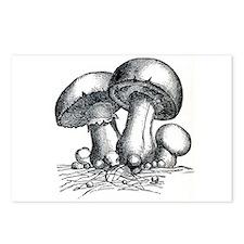Mushrooms Postcards (Package of 8)