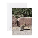rabbit Greeting Cards (Pk of 20)