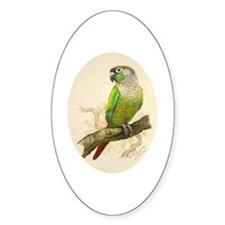 Greencheeked Conure Oval Decal