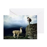 Llama Encounter Greeting Card