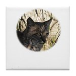 Bobcat in Brush Tile Coaster