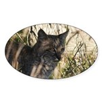 Bobcat in Brush Oval Sticker (50 pk)