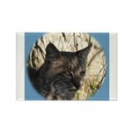 Bobcat in Brush Rectangle Magnet (100 pack)