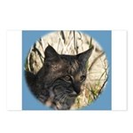 Bobcat in Brush Postcards (Package of 8)